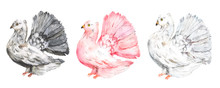 Watercolor Set Of Three Doves,...