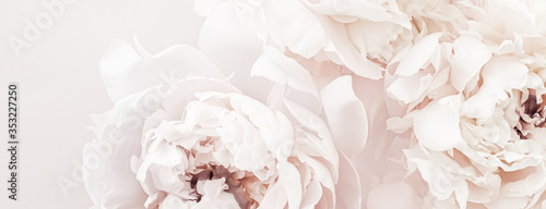 Photo Pastel peony flowers in bloom as floral art background, wedding decor and luxury