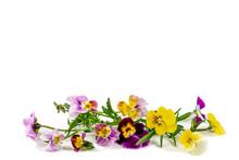 Pansies Violets Flowers It Is ...