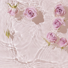 Summer Scene With Pink Rose Flowers In Water. Sun And Shadows. Minimal Nature Background.