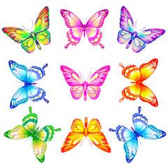 butterfly644