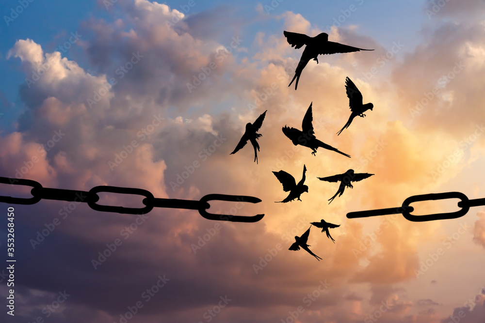 Fototapeta Freedom concept. Silhouettes of broken chain and birds flying in blue sky