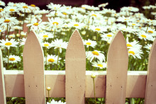 Wooden Picket Fence With White...