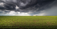 Rain Coming Over A Soybean Crop In Spring