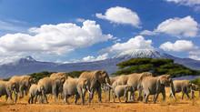Mt Kilimanjaro Tanzania, Large...
