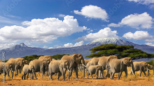 Mt Kilimanjaro Tanzania, large herd of elephants and snow capped mountain, taken on a safari trip in Kenya with cloudy blue sky Fotobehang