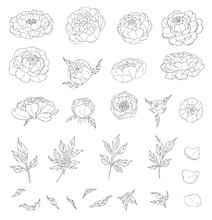 Big Set Of Peony Flowers And L...
