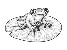 Frog On A Leaf Of A Water Lily...