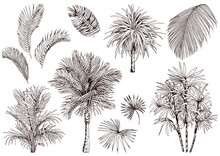 Collection Of Tropical Palm Leaves And Trees.