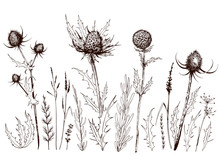 Set Of Thistles And Wild Meado...