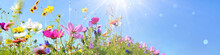 Colorful Wild Flower Meadow With Blue Sky And Sun Rays With Bokeh Lights - Floral Summer Background Banner With Copy Space