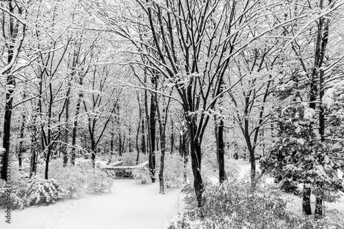 雪木立の散歩道