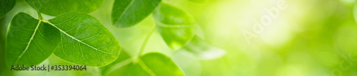 Fototapeta Beautiful nature view of green leaf on blurred greenery background in garden with copy space using as summer background natural green leaves plants landscape, ecology, fresh cover page concept.  obraz