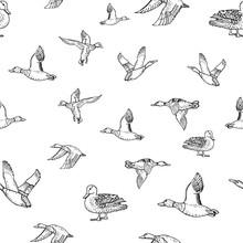 Mallard Duck Vector Sketch