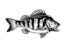 Largemouth Bass Vintage Concept