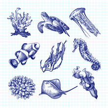 Hand-drawn Sketch Set Of Underwater Creatures Drawn With Blue Pen On A White Background. Ocean Life. Aquarium Plants And Animals. Coral, Turtle, Jellyfish, Sea Weed, Crampfish