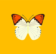 Hebomoia Butterfly. Illustrati...