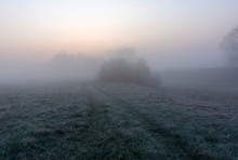 Misty Morning In The Field