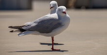 Two Seagulls Standing On Concr...