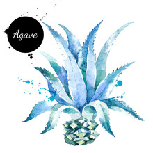 Watercolor Hand Drawn Agave Pl...