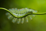 caterpillar on a green leaf