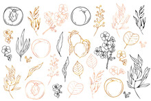 Vector Black, Gold And Pink Hand Painted Elements Of Fruits And Flowers: Peaches, Peach Tree Flowers, Branches, Twigs, Leaves.