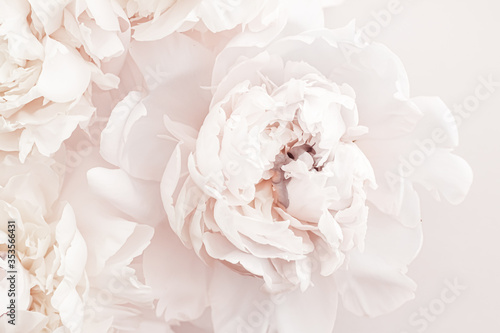Stampa su Tela Pastel peony flowers in bloom as floral art background, wedding decor and luxury