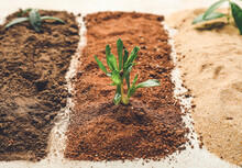 Different Types Of Soil With Plants On Light Background, Closeup
