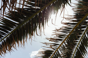 Bottom view of branches of palm tree with sunlight and blue sky at background