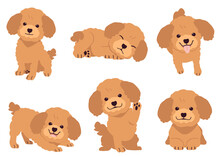 The Collection Of Poodle In Ma...