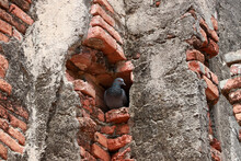 Pigeons Live In The Holes Of B...