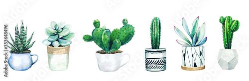Fototapeta Set of six potted cactus plants and succulents
