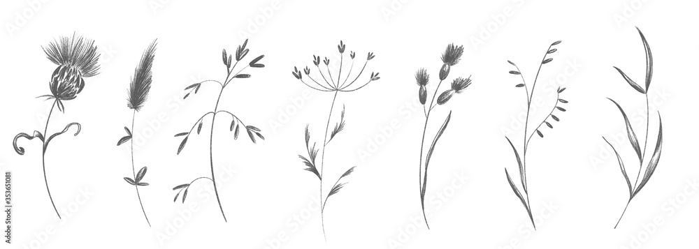 Fototapeta Cute twig of summer grass with flower buds set. Sketch pencil digital art flat position, top view. Print for wrapping paper, wrapping, fabrics, web, invitation, wedding, stickers.