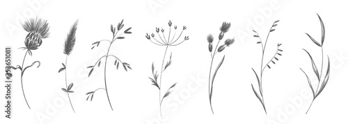Cute twig of summer grass with flower buds set. Sketch pencil digital art flat position, top view. Print for wrapping paper, wrapping, fabrics, web, invitation, wedding, stickers.