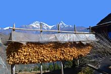 Nepali Traditional Corn Cobe S...