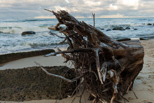 Old Driftwood On The  Baltic Sea
