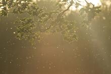 Light Shining Through Tree Lea...