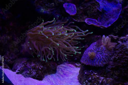 Photo Coral bajo el mar