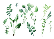 Watercolor Set Of Forest Herbs...