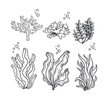 Sea Plants  Seaweed Vector Hand Drawing
