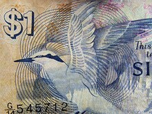 Singapore One Dollar Bill Featuring A Black-Naped Tern. This Series Of Banknotes Was Discontinued In 1987.