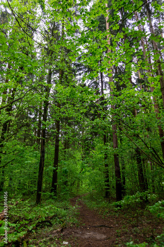Spring forest hiking path near Moscow, Russia.  Landspcapes and nature.