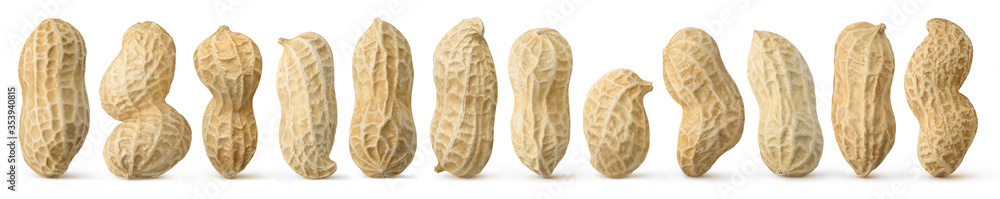 Fototapeta Peanuts diversity. 12 raw shelled peanuts of different shapes standing vertically isolated on white background