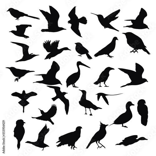 Obraz Bird Collection - fototapety do salonu