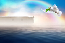 White Dove Flying With Olive Branch In Its Beak. Noah's Ark Bible Story Theme Concept.