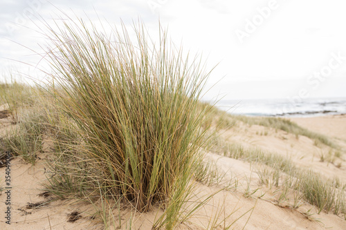 Photo landscape of a beach with ammophila beach grass as the main subject