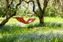 Beautiful Landscape With Red Hammock In The Spring Garden With Blooming Apple Trees, Sunny Day. Concept For Relaxation, Rural Tourism. Selective Focus