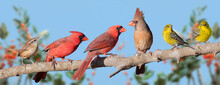 Variety Of Songbirds On A Branch