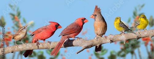 Stampa su Tela Variety of Songbirds on a Branch