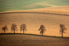 Autumn South Moravian Landscape With Five Trees And Rolling Waving Hills. Wavy Fields In Czech Republic. Czech Tuscany. Minimalistic Nature Background.